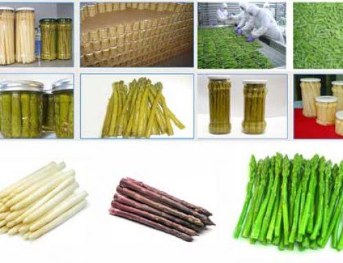 Nghiên cứu và phát triển các sản phẩm từ măng tây