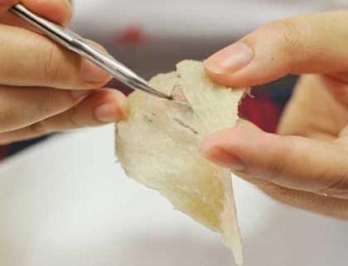 Cách làm sạch tổ yến thô với 5 bước đơn giản