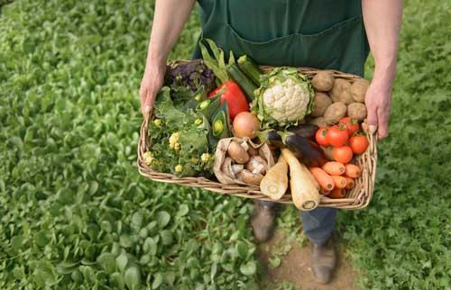 Đảm bảo chất lượng Từ Nông Trại Đến Bàn Ăn trong sản xuất kinh doanh và sử dụng rau, quả